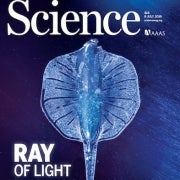 Meet the robotic stingray powered by heart muscles from a rat and controlled by light