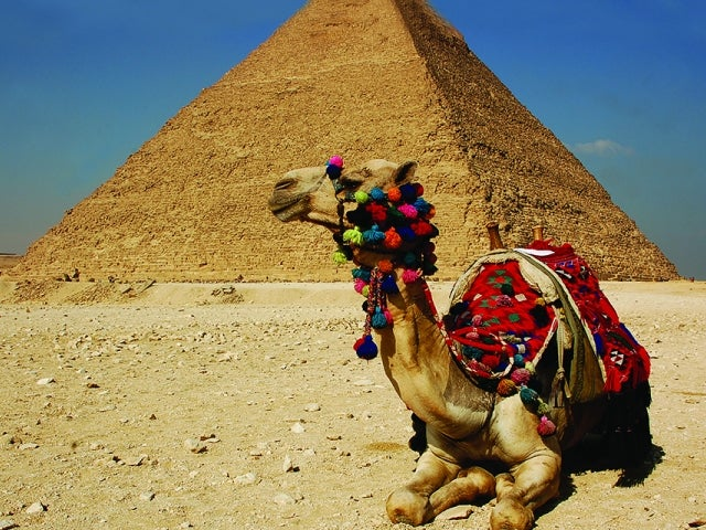 camel next to pyramid
