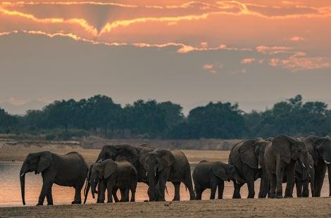 Elephants with sunset