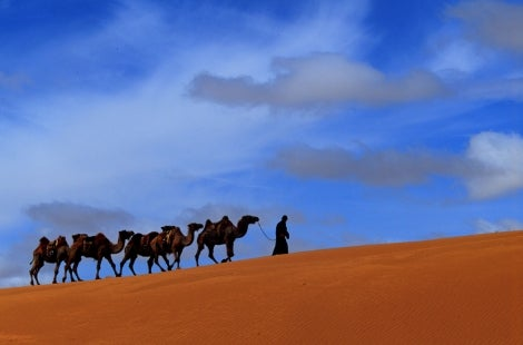 Nomad with Camels