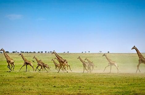 Tanzania Migration